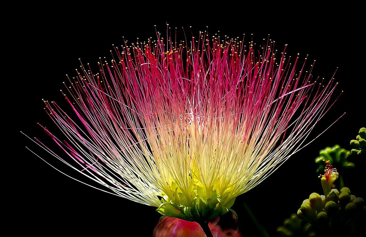 flower-405330_1280